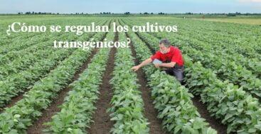 Cultivos Transgénicos: Conocimientos sobre Seguridad, Regulación y Sostenibilidad