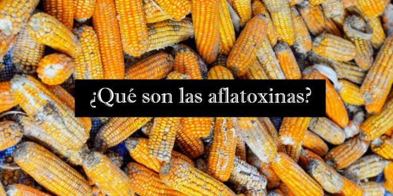 aflatoxins-870x484